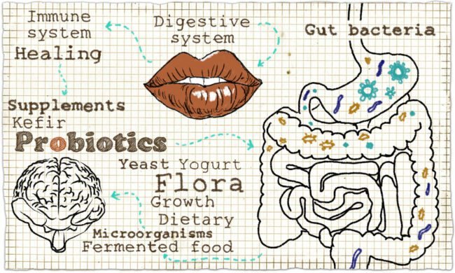 Probiotics and digestion Nature Made